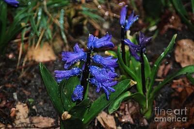 Blue Hyacinth Art Print by Mark McReynolds
