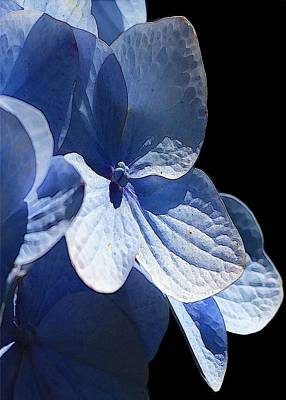 Digital Art - Blue Hydrangea by Carrie OBrien Sibley