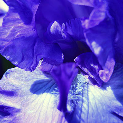 Photograph - Blue Iris by Donna Corless