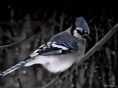 Painting - Blue Jay At Night by Debra     Vatalaro