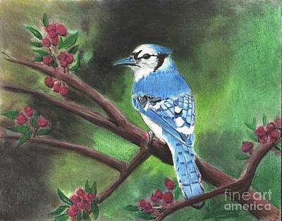Drawing - Blue Jay by Christian Conner