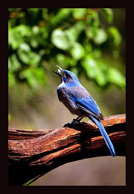 Mannequin Dresses - Blue Jay Eating Popcorn by Susanne Still