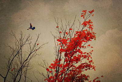 Photograph - Blue Jay Fall by Emily Stauring