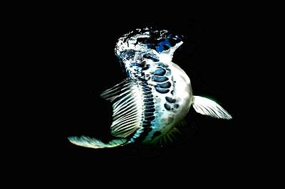 Blue Koi On The Rise Art Print by Don Mann