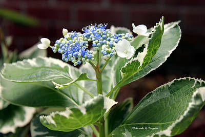 Photograph - Blue Lace 3 by Deborah Hughes