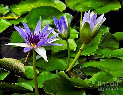 Photograph - Blue Lilies by Nick Zelinsky