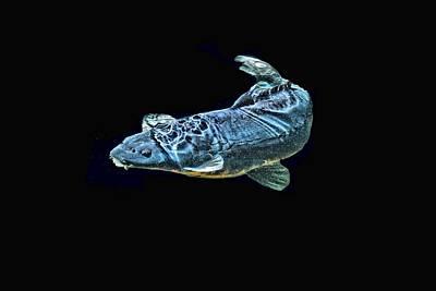 Shebunkin Photograph - Blue Monster by Don Mann