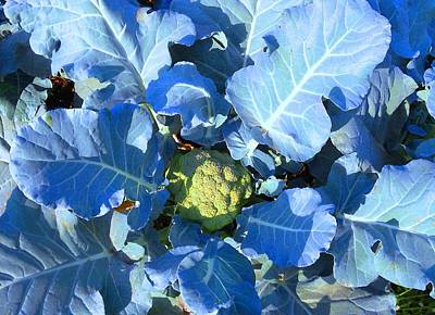 Blue Moon Cauliflower Original