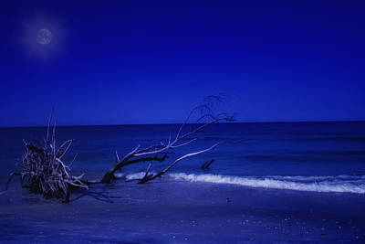 Photograph - Blue Moon by Gina Cormier