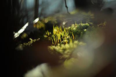 Photograph - Blue Mountain by Rebecca Sherman