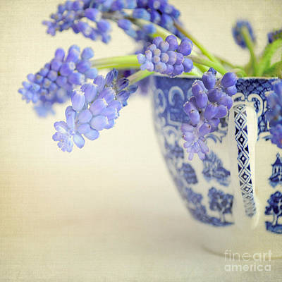 Blue Muscari Flowers In Blue And White China Cup Art Print by Lyn Randle