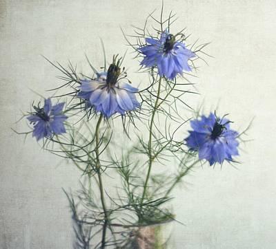 Blue Nigella Sativa Flowers Art Print by By Julie Mcinnes
