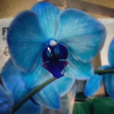 Orchids Photograph - Blue Orchid by Ann Miles