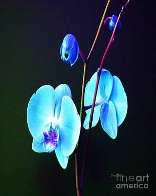 Orchids Digital Art - Blue Orchids by Doris Wood