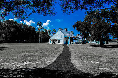 Photograph - Blue Plantation by Shannon Harrington