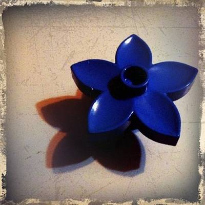 Shadow Photograph - Blue Plastic Flower by Ken Powers