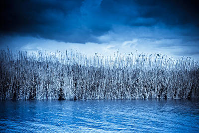 2012 Photograph - Blue Reeds by Ruth MacLeod
