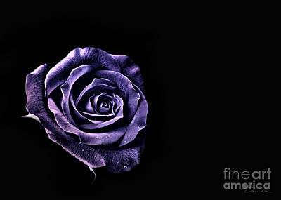 Photograph - Blue Rose by Danuta Bennett