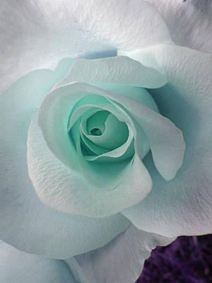 Blue Rose Art Print by Robin Hewitt