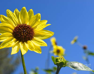 Photograph - Blue Skies And Sunny Flower by Johanne Peale