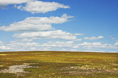 Photograph - Blue Sky And Clouds Over Blueberry Farm Field Maine by Keith Webber Jr