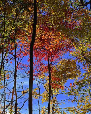 Blue Sky Autumn Art Print