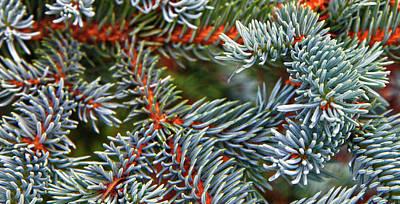 Blue Spruce Wasilla Ak Art Print by Forest Alan Lee