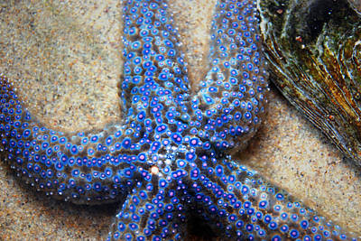Blue Starfish Art Print