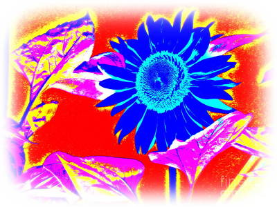 Blue Sunflower Art Print by Pauli Hyvonen