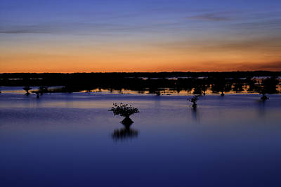 Photograph - Blue Sunset Mangroves by Rich Franco