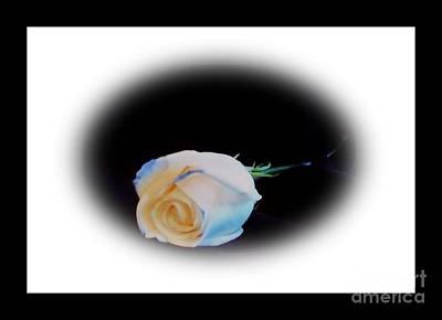 Laying Digital Art - Blue Tipped Rose Lll by Marsha Heiken