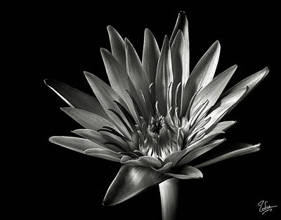 Blue Water Lily In Black And White Art Print by Endre Balogh