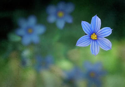 Blue Flowers Photograph - Blue Wildflowers by by Janice Darby