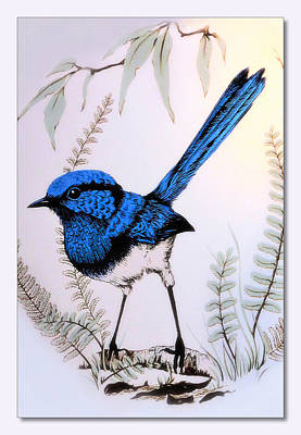 Blue Wren 022 Art Print by Kevin Chippindall