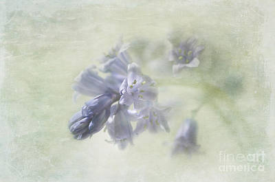Photograph - Bluebell by Marion Galt