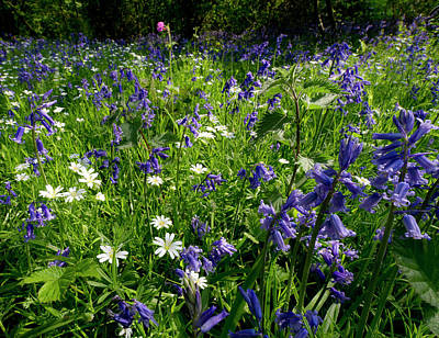 Photograph - Bluebell Woods  by Gary Eason