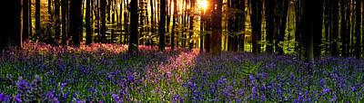 Art Print featuring the photograph Bluebells In Morning Sun  by John Chivers