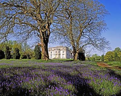 Bluebells In The Pleasure Grounds, Emo Art Print by The Irish Image Collection