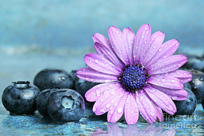 Black Diet Photograph - Blueberries And Daisy by Sandra Cunningham