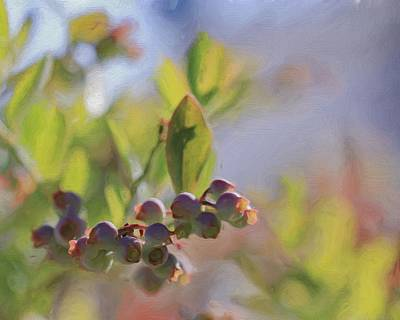 Blueberries And Sunlight Art Print by Heidi Smith