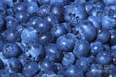 Photograph - Blueberries With Waterdrops by Sharon Talson