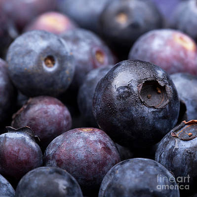 Blueberry Background Art Print by Jane Rix