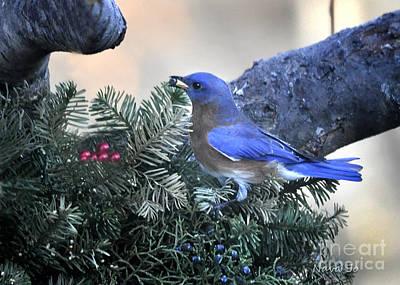Photograph - Bluebird Christmas Wreath by Nava Thompson