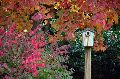 Photograph - Bluebird House Color Surround by Sandi OReilly