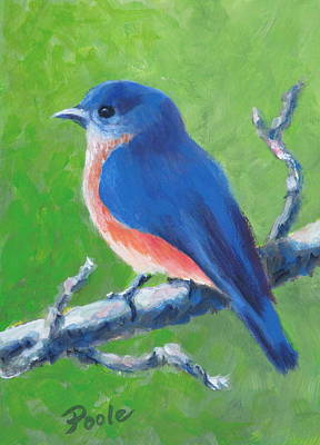 Bluebird In Spring Art Print