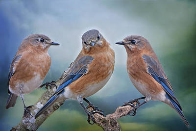 Bluebird Trio Original by Bonnie Barry