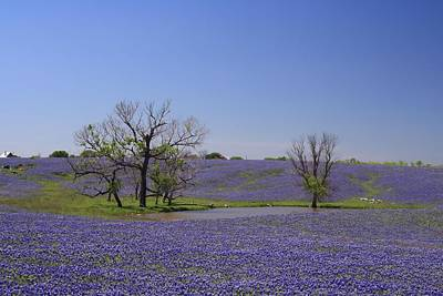 Photograph - Bluebonnet Acres by Lynnette Johns