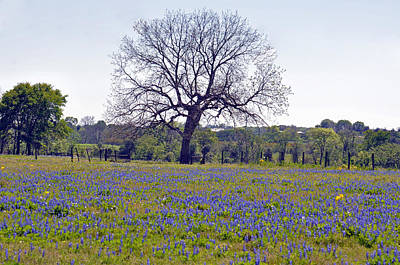 Photograph - Bluebonnet Pasture by Teresa Blanton