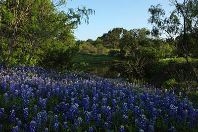 Art Print featuring the photograph Bluebonnets At The Pond by Susan Rovira