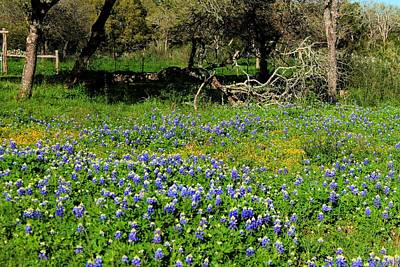 Smurfs Photograph - Bluebonnets Or Smurfs by Sarah Broadmeadow-Thomas